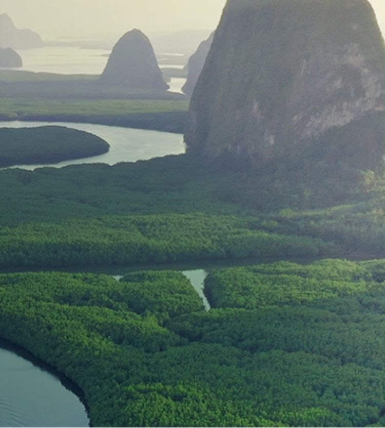 River running through mountains and forests