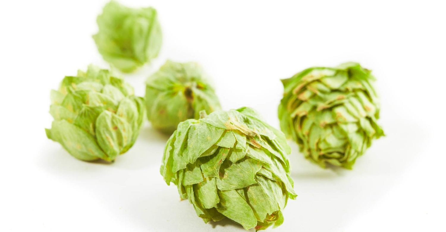 Forward Contracting Hops | Craft Beer & Brewing Magazine