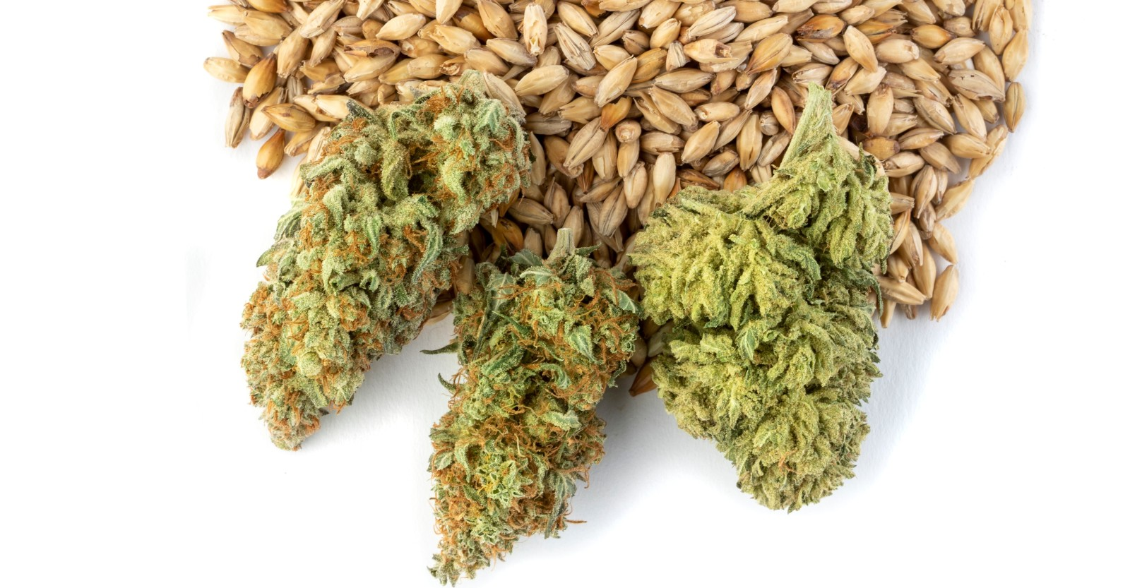 Dosing Homebrew With Marijuana Tinctures | Craft Beer & Brewing