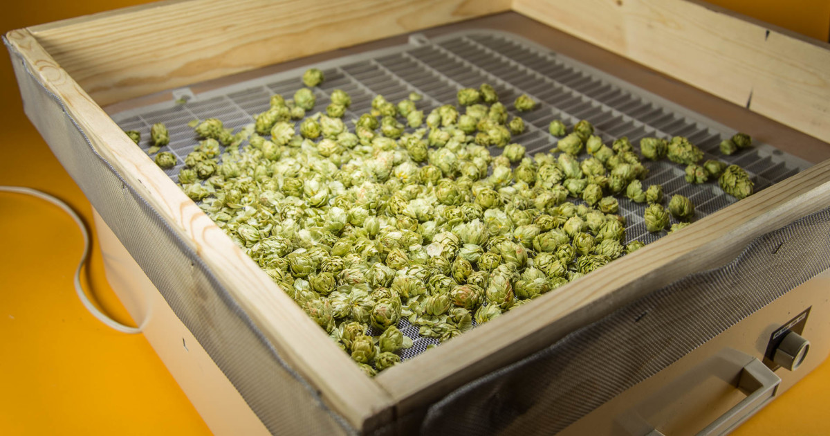 DIY: Hops Dryer
