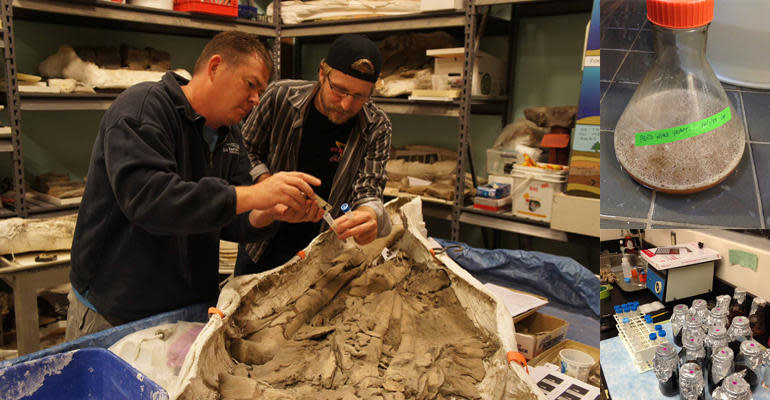 Montagem com paleontólogos, levedura e materiais químicos