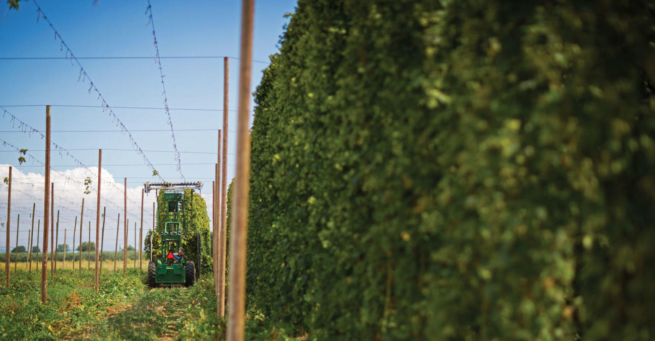 The Business of Hops Primary Image