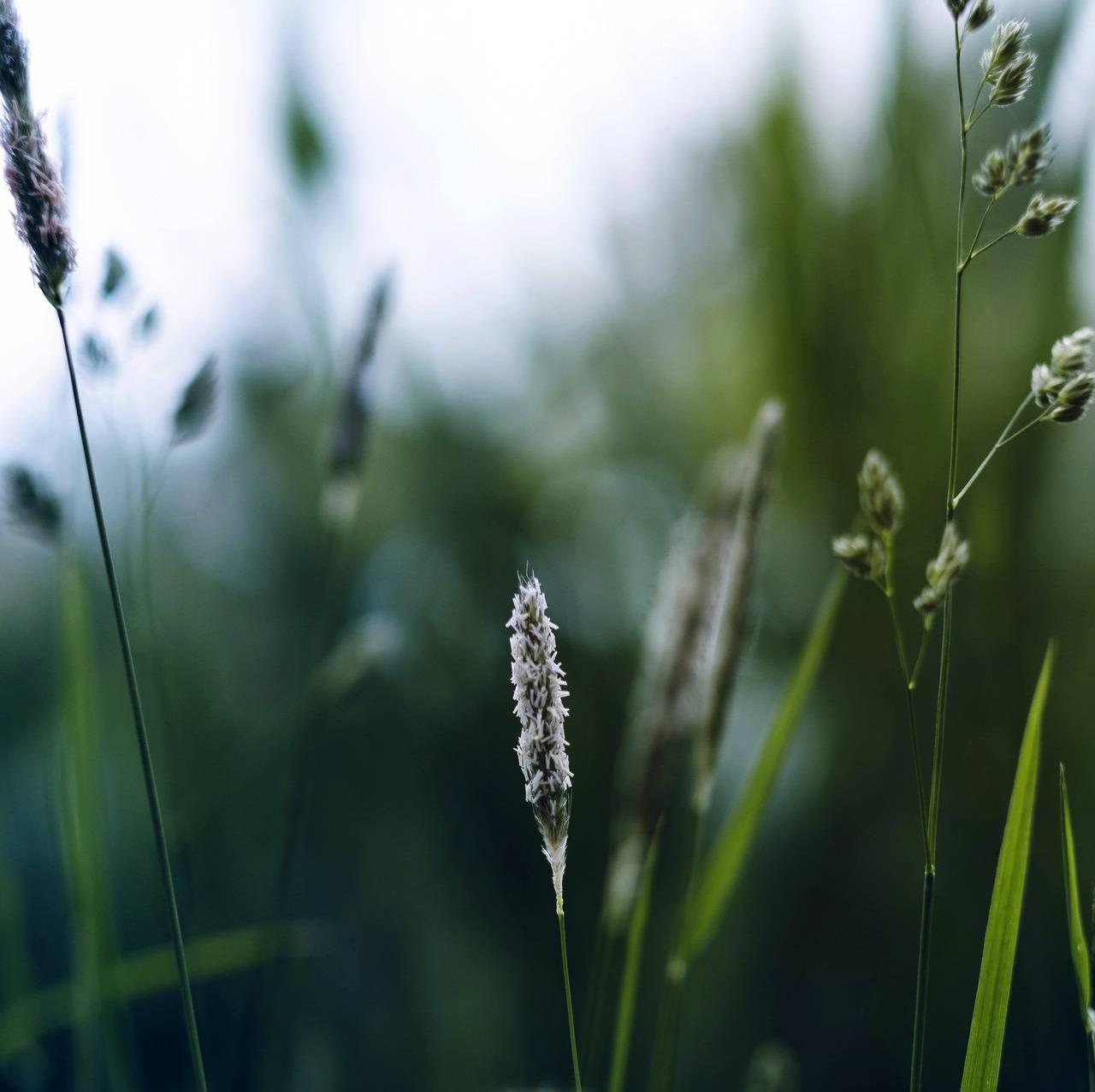 Maskros och gräs Tele2 Företag puff