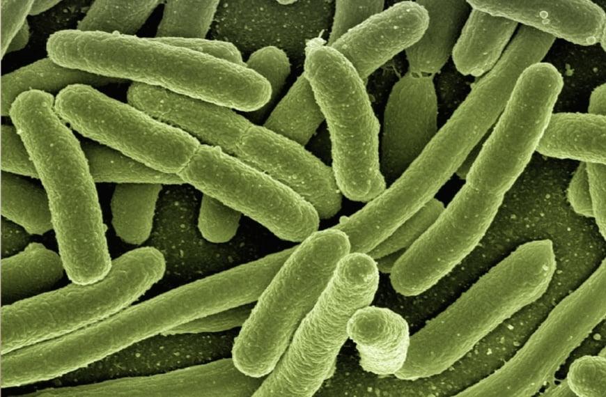 "FIERCE BIOTECH   ""Viome scores FDA breakthrough label for cancer-screening, microbiome-sequencing AI platform"""