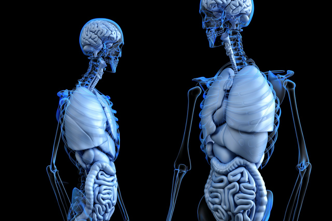 How Your Gut Controls Your Mind and What to Do About It