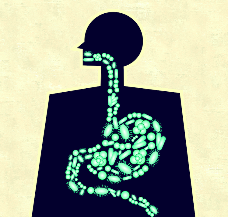 OPTIMIZING YOUR MICROBIOME