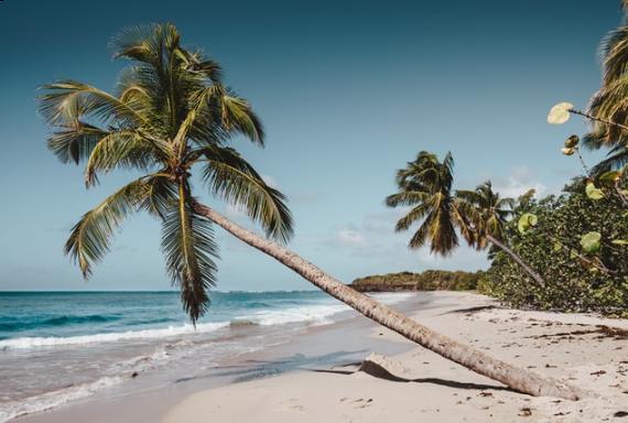 Warum Martinique? staticContent:seoTemplage.image