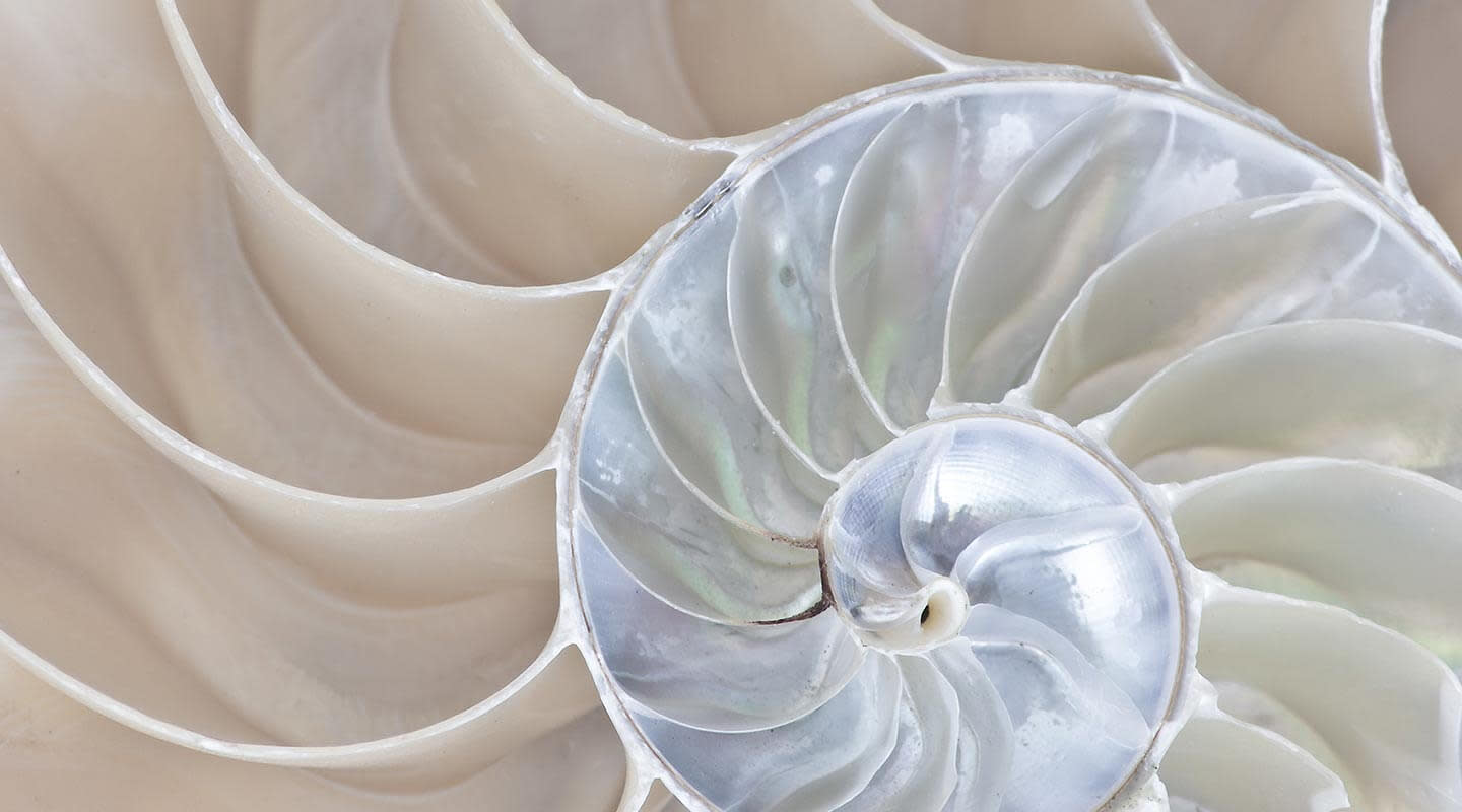 Close up image of a sea shell.