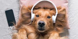 Hörbücher für Hunde