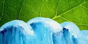 Dem Klimawandel auf der Spur: Unsere Top 10 Sachbücher