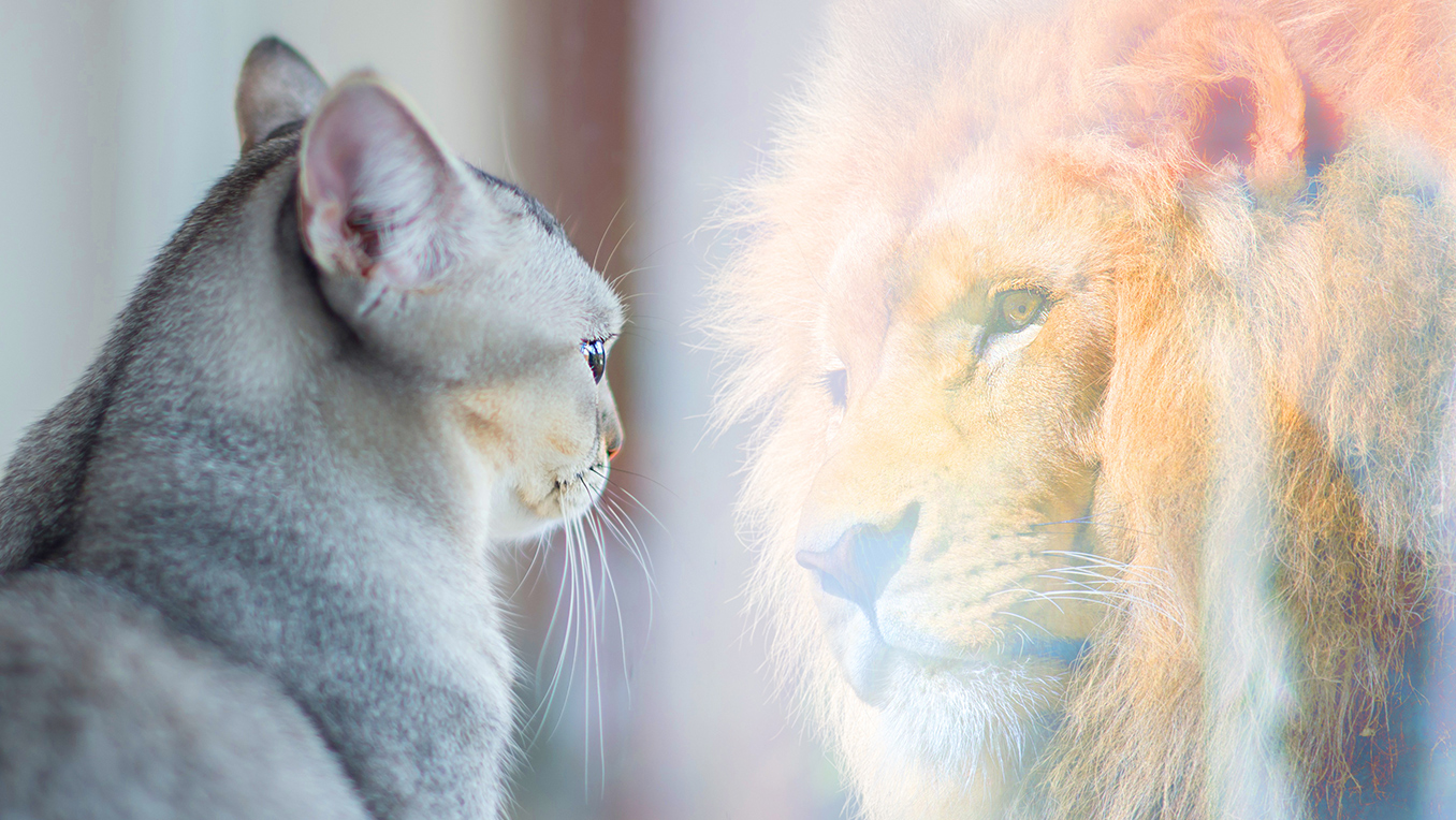 A cat looks into a mirror and sees itself as a lion