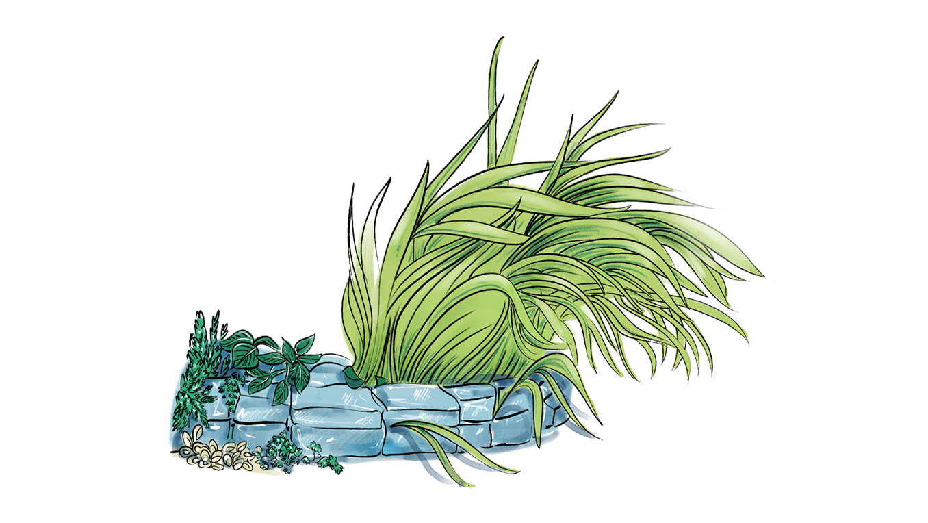 A drawing of leaves and grass growing from ground-level stone masonry