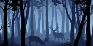 Kommt mit in den Wald