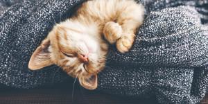 Audiolibri per conciliare il sonno