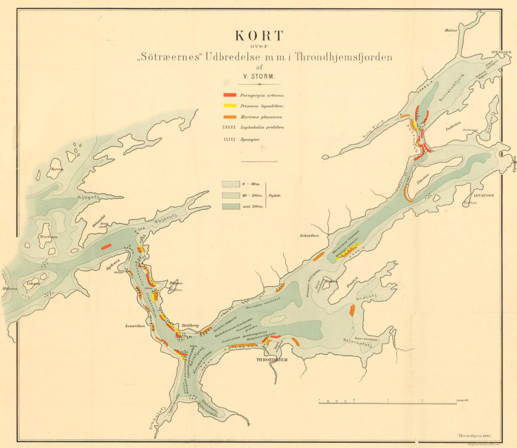 Map showing cold-water corals in the Trondheim Fjord. Published by Storm in 1901.