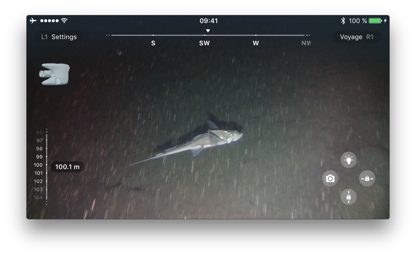 Ratfish (Chimaera monstrosa) at 100 m depth