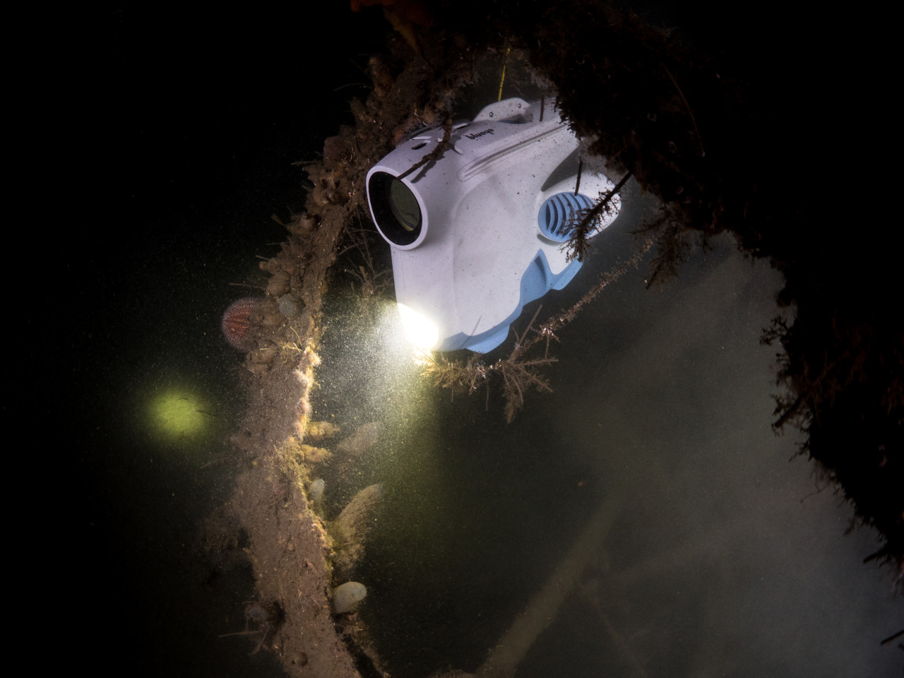 Several creatures live on the wreck