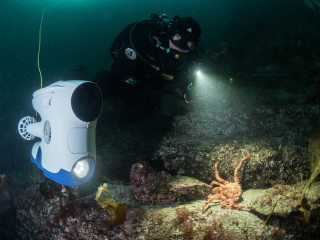 Blueye Pioneer and scuba diver looking at crab