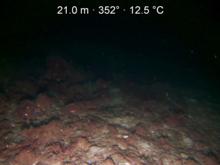 Looking at the seabed