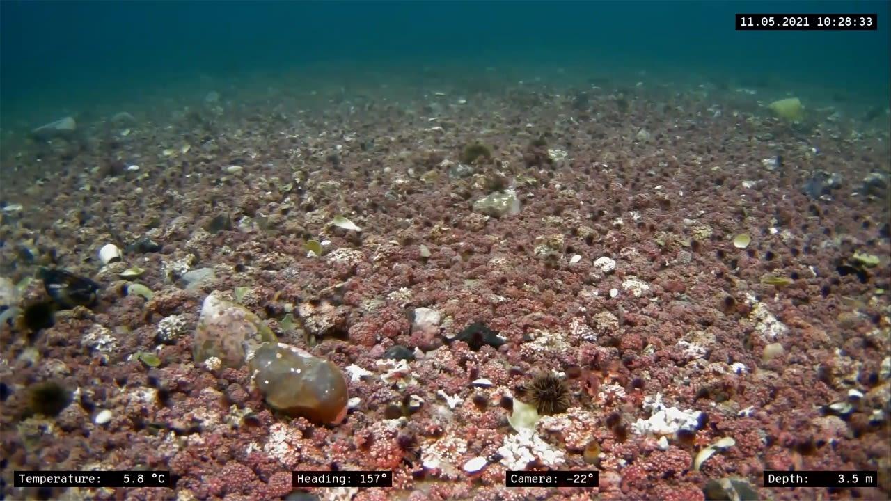 Undervannsbilder fra en Blueye ROV på Sydspissen i Tromsø