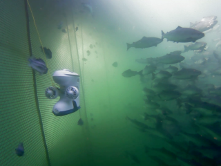 Blueye Pro drone diving in a fishpen in Norway