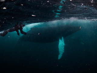 Jonas swimming next to large humpback whale