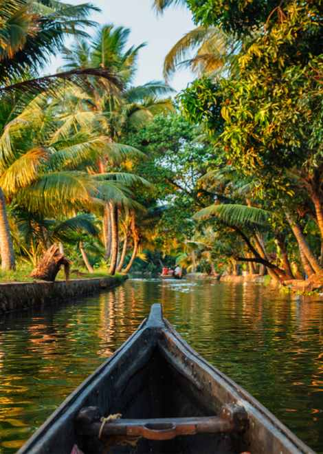Paddle gently along the calm backwaters by canoe