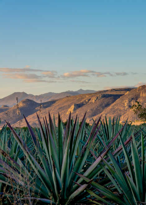 Views over the agave fields in Oaxaca during our master mezcal tour