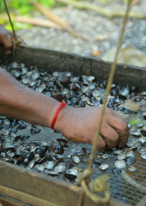 Locally caught clams being sifted