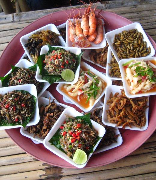 Bug life – A guide to eating insects in Thailand header image