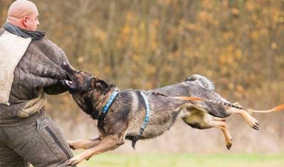 Dog Chase (12 - 16 ppl.)