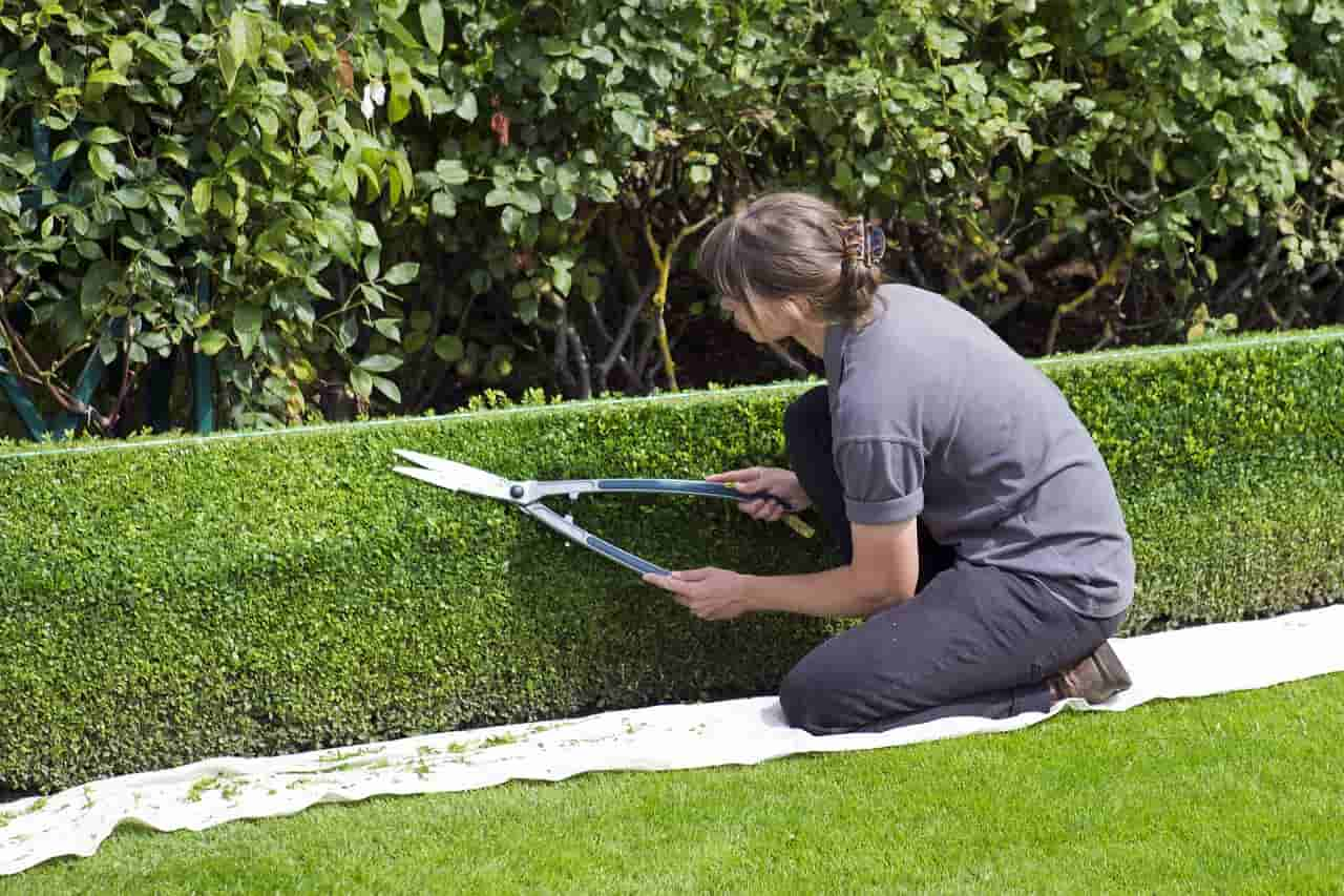 How Landscapers Increase Rates