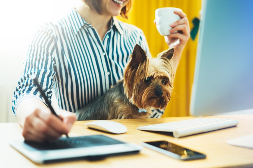 dog friendly workplaces