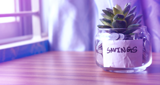 succulent plant in a pot of coins