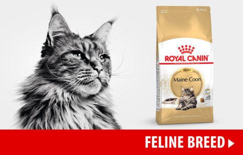 Nourriture Royal Canin Breed pour chat >