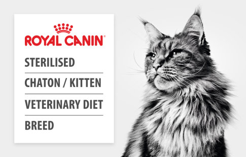 Aliments Royal Canin pour chat >