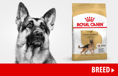 Nourriture Royal Canin Breed pour chien >