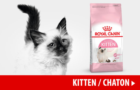 Nourriture Royal Canin pour chaton >