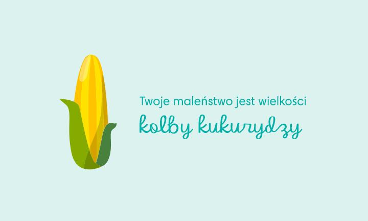 baby size of ear of corn week 24