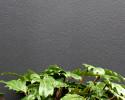 Dark colours like Dulux Domino look modern and make greenery pop.