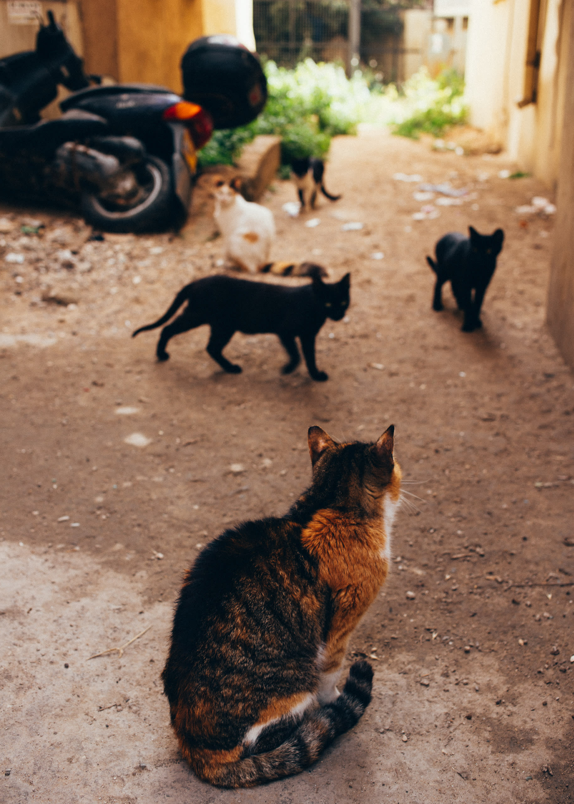 Cats in alley