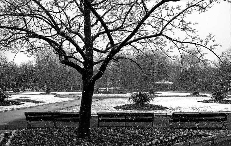 D513 - Stephen's Green in the Snow, Dublin.