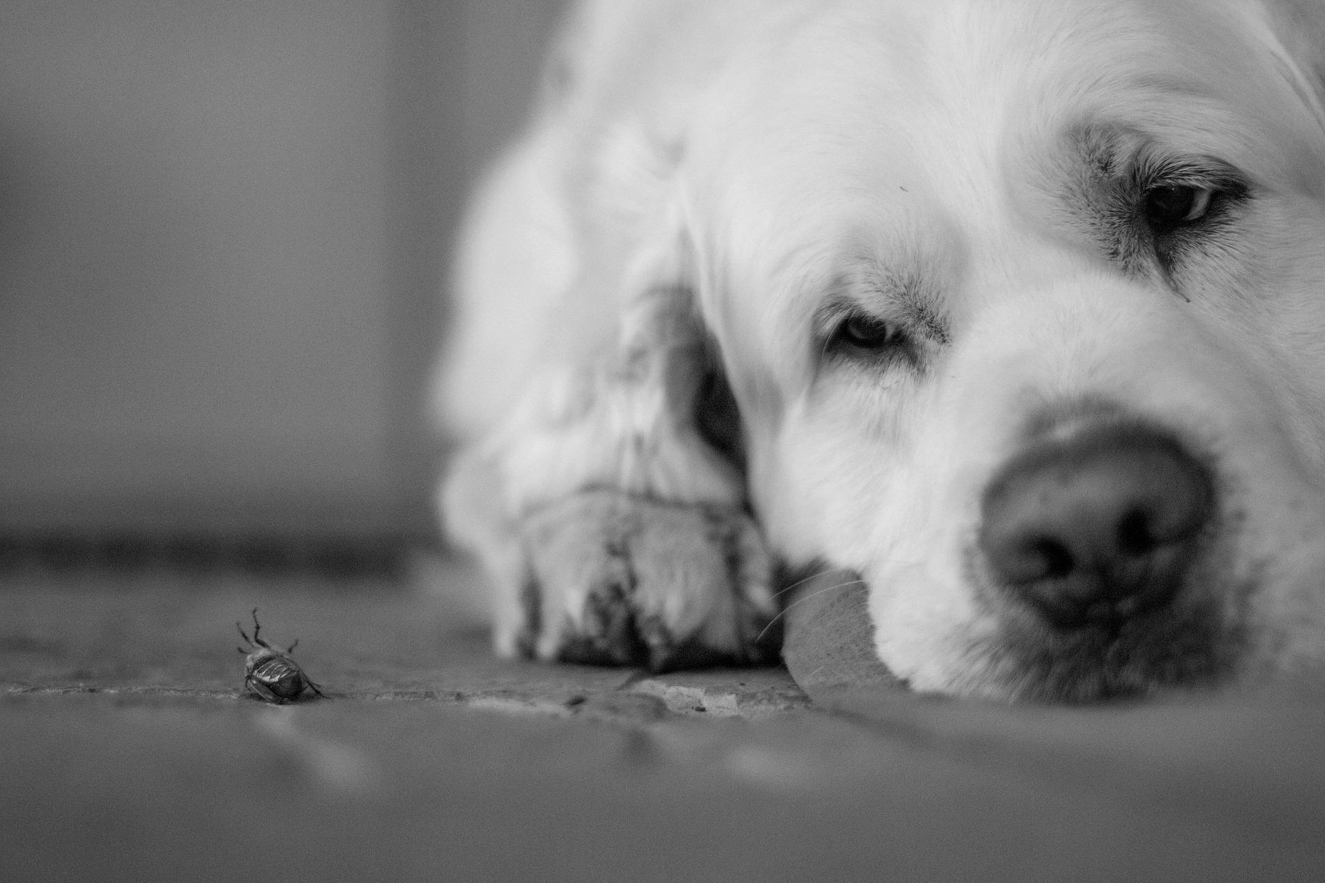dog-2537905 1920