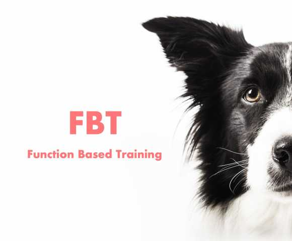 FBT - Function Based Training