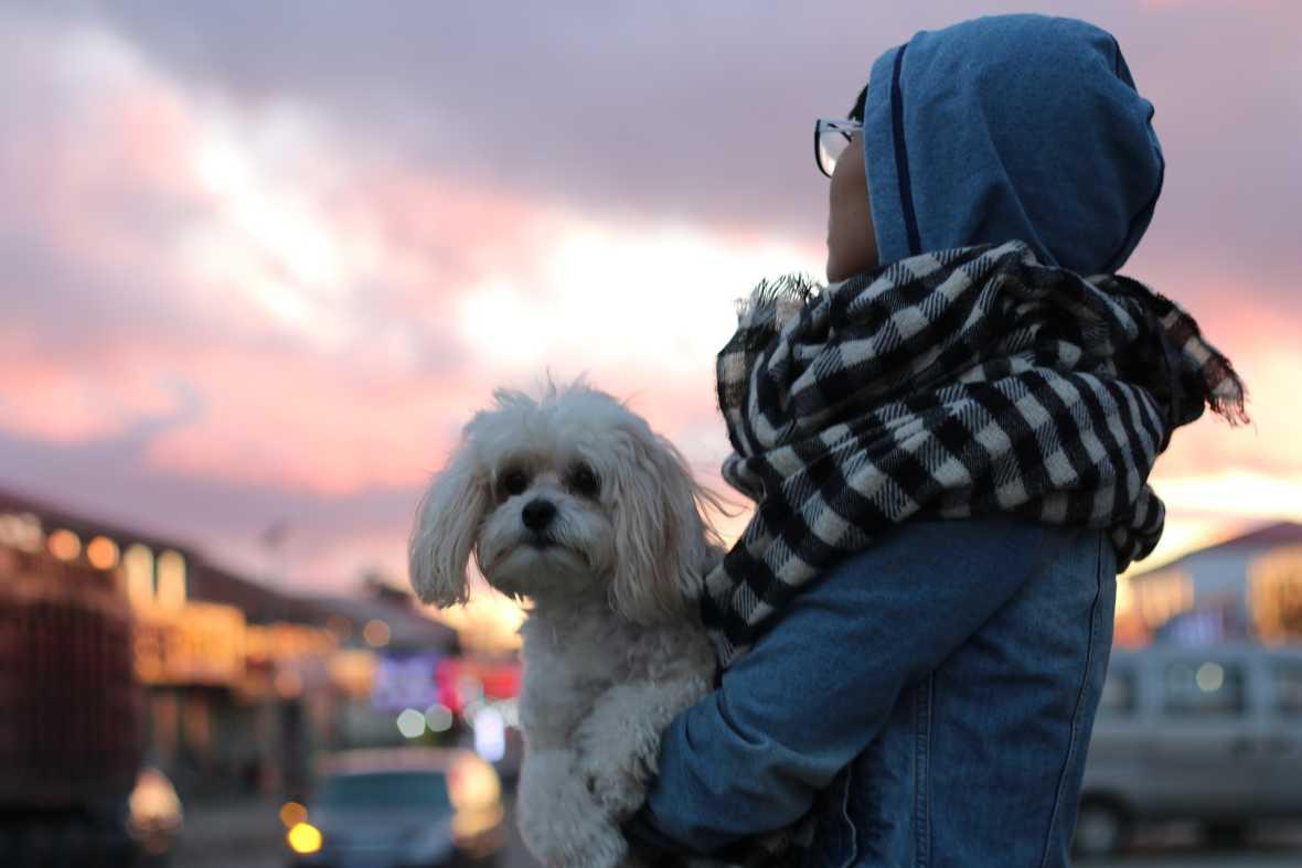 Mitä Maksaa Koiran Kaihileikkaus