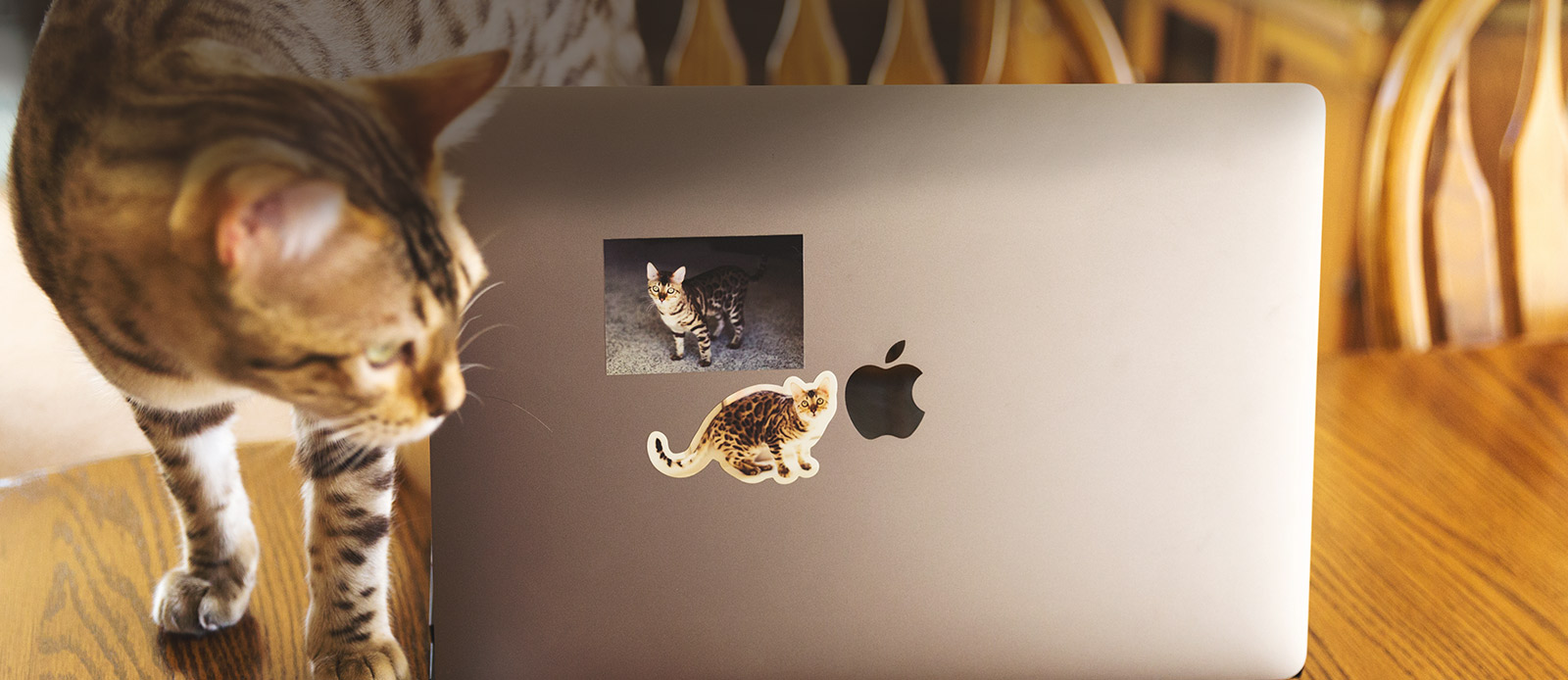 Cat stickers by Sticker Mule