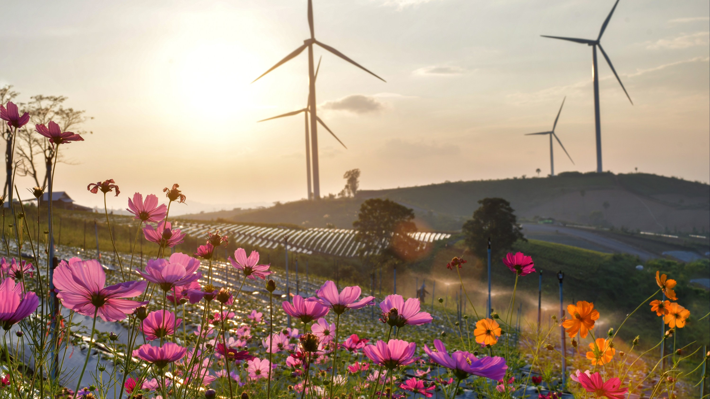 flowers and wind farm