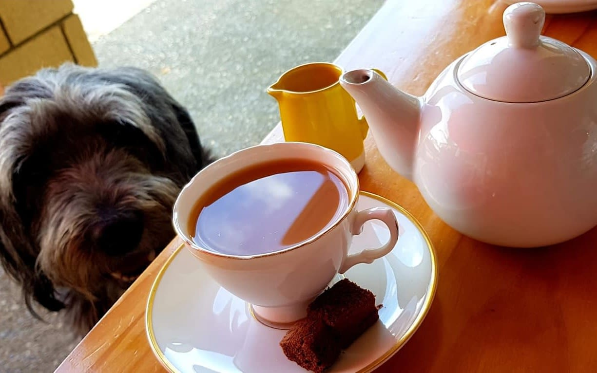 Dog sat with a cup of tea and a slice of cake on a table next to it