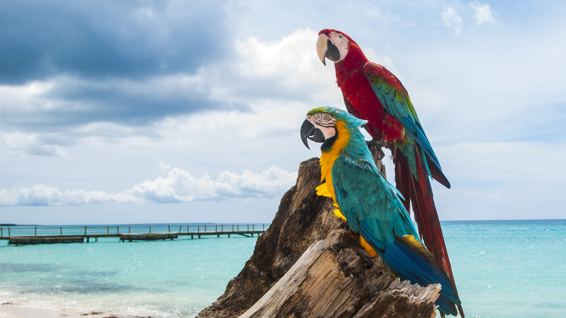 Two parrots on a beach