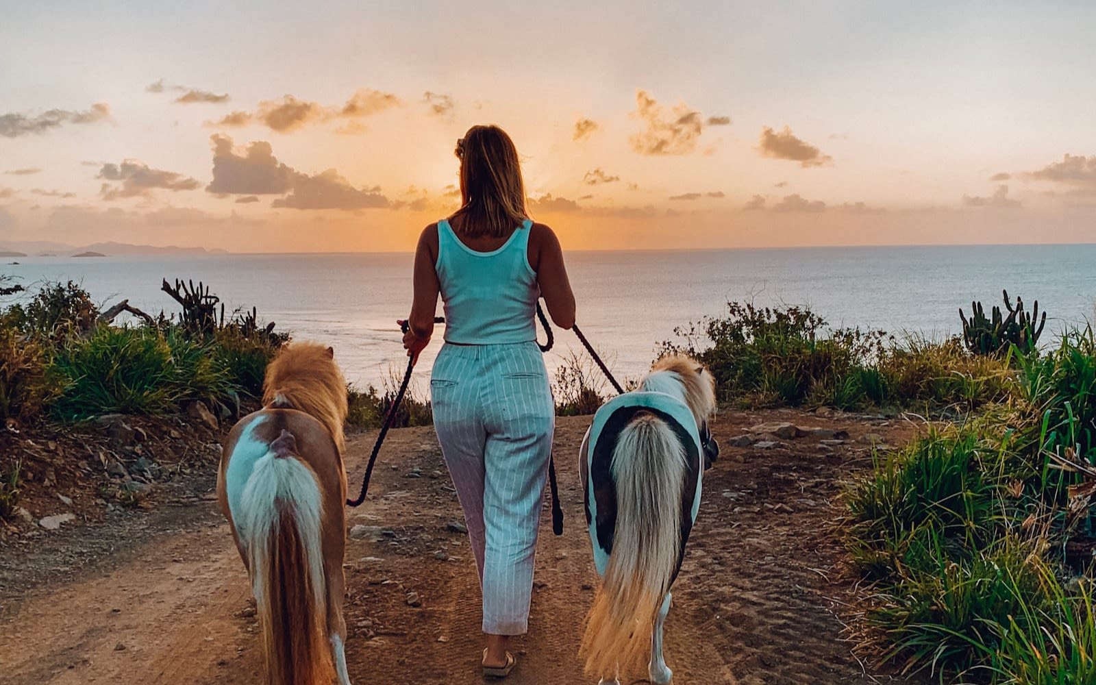 Woman walking with two miniature horses on Necker Island